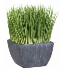 Potted Grass, $9.95