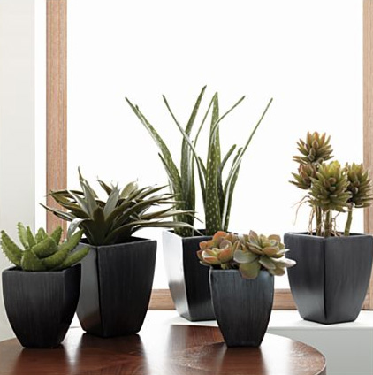 Potted Succulents, $14.95-$29.95.