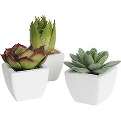 Artificial Mini Succulents, $10/set of 3.