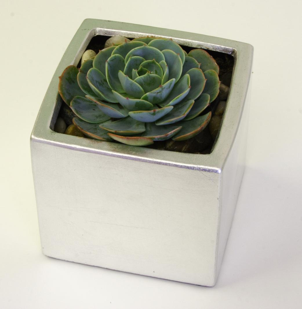 Succulent in silver container, $25.